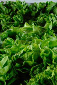 photo of lettuce lot