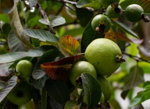 food healthy nature garden