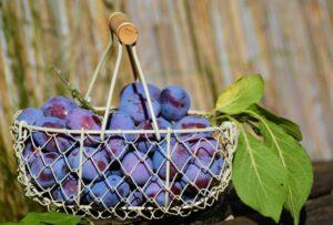 plums fruit
