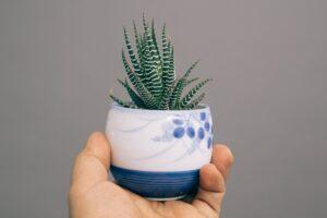 zebra aloe vera plant with white and blue ceramic vase